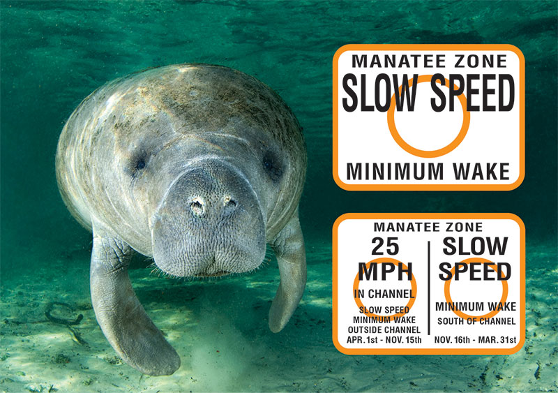 Picture of manatee with warning signs