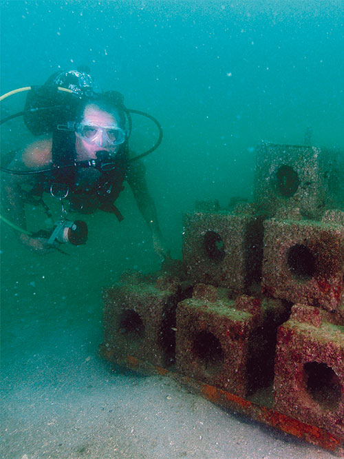 Reef diver under water